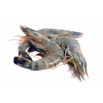 Fresh Tiger Prawn XL 100G /...