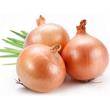 EGYPT RED ONION 500G / PACK