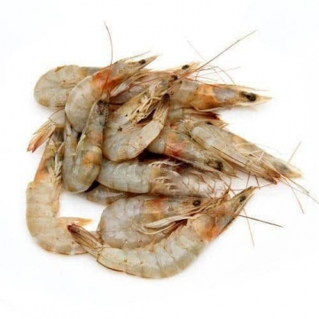 Fresh Prawn XL 100G / Pack
